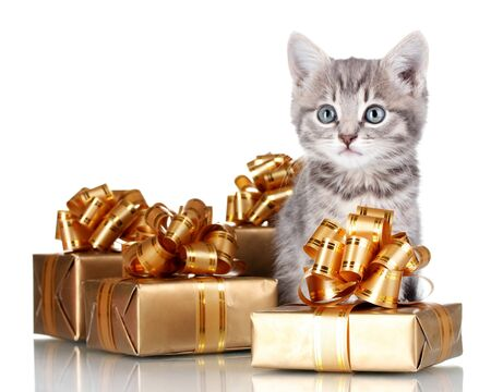 Funny kitten and golden gifts  isolated on white photo