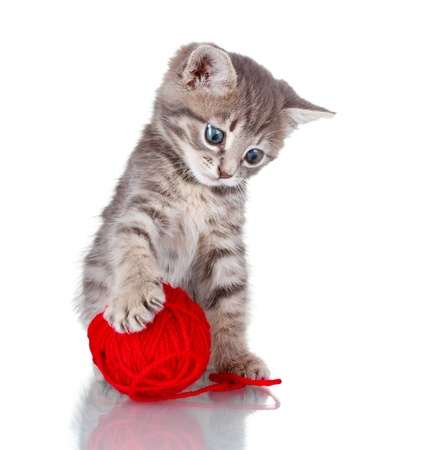 Funny gray kitten and ball of thread isolated on white Stock Photo - 10817772