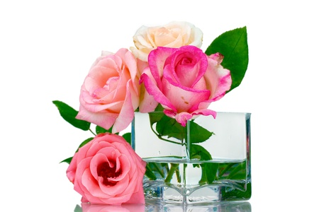 Beautiful roses in transparent vase isolated on white Stock Photo