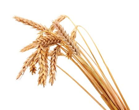wheat plant: Wheat isolated on white Stock Photo