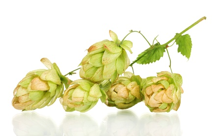 beautiful green hop isolated on white Stock Photo - 11070239