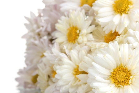 beautiful bouquet of daisies isolated on white Stock Photo - 11068874