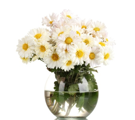 beautiful bouquet of daisies in vase isolated on white photo