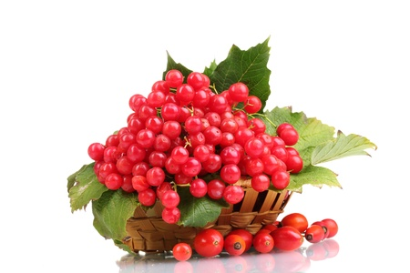 red berries of viburnum in basket and briar isolated on white photo