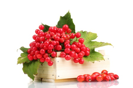 briar bush: red berries of viburnum in wooden box and briar isolated on white Stock Photo