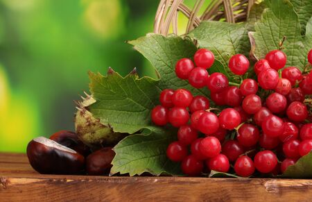 red berries of viburnum in basket and chestnuts on wooden table on green background photo