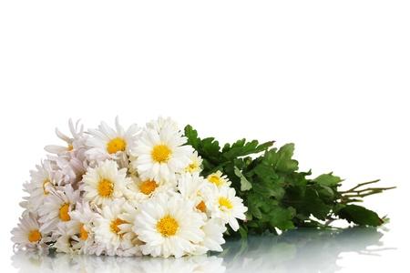 beau bouquet de marguerites isol� sur blanc