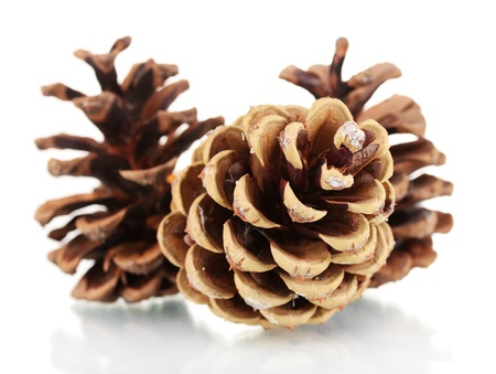 pine three: three beautiful pine cones isolated on white