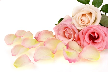 Beautiful bouquet of roses and petals isolated on white photo