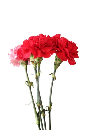 Bouquet of carnations isolated on white Stock Photo - 11399602