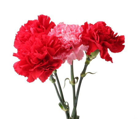 Bouquet of carnations in a glass isolated on white Stock Photo - 11399628