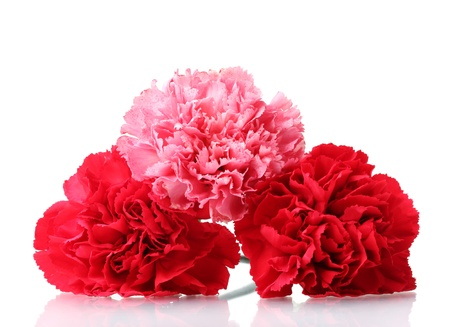 Bouquet of carnations isolated on white Stock Photo - 11407332