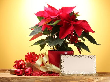 beautiful poinsettia in flowerpot, postcard, gifts and Christmas balls on wooden table on yellow background photo