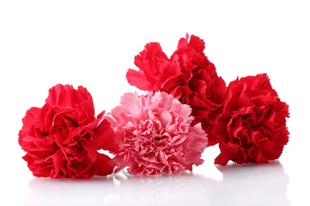 Bouquet of carnations isolated on white Stock Photo - 11725564