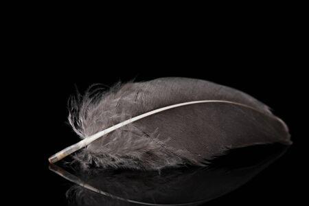 beautiful feather on black background photo