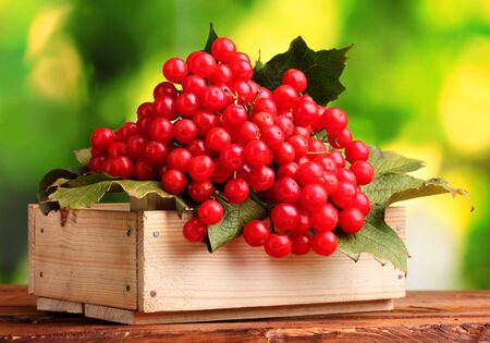 red berries of viburnum in wooden box on green background photo