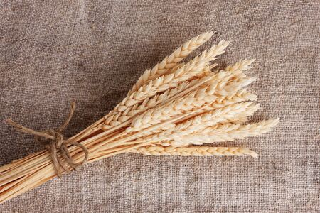 wheat ears on burlap closeup photo