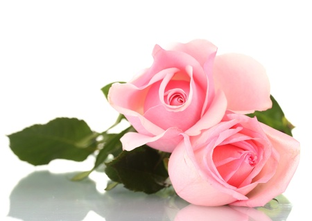 pink and green: Pink rose isolated on white Stock Photo