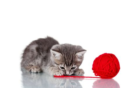 Funny gray kitten and ball of thread isolated on white Stock Photo - 11911255