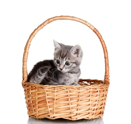 Beautiful gray kitten in basket isolated on white photo