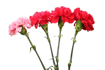 Bouquet of carnations isolated on white Stock Photo - 11912152