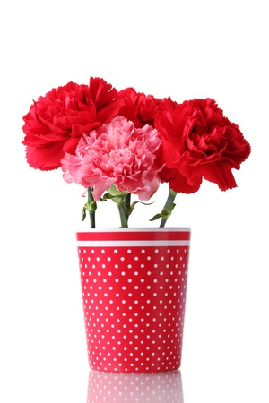 Bouquet of carnations in a glass isolated on white Stock Photo - 11912169
