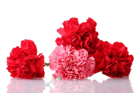 Bouquet of carnations isolated on white Stock Photo - 11912190