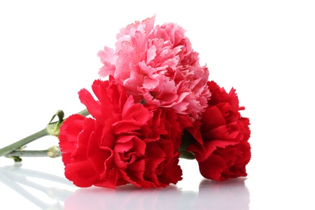 Bouquet of carnations isolated on white Stock Photo - 11912184
