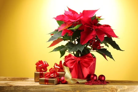 beautiful poinsettia in flowerpot, gifts and Christmas balls on wooden table on yellow background photo