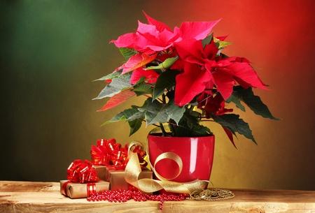 flor de pascua: flor de pascua hermosa en maceta en la mesa de madera sobre fondo brillante