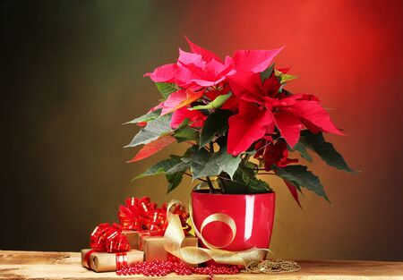 beautiful poinsettia in flowerpot on wooden table on bright background photo
