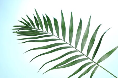 Beautiful palm leaf on blue background photo