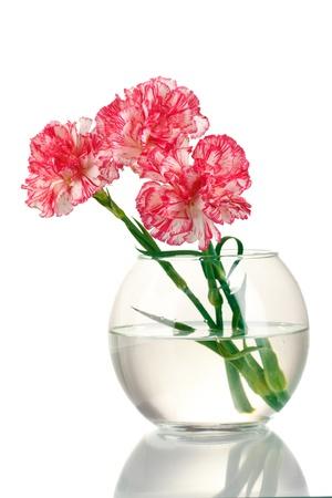 Beautiful carnations transparent vase isolated on white photo