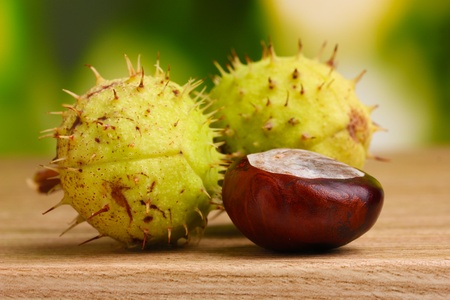 green and brown chestnuts on wooden table on green background Stock Photo - 12134280
