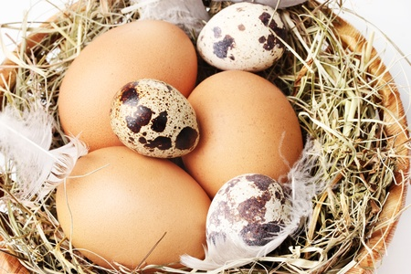 chicken and quail eggs in a nest closeup photo