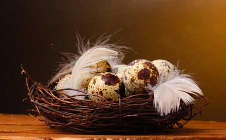 quail eggs in nest on wooden table on brown background photo