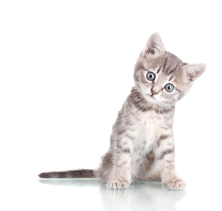 Beautiful kitten isolated on white Stock Photo - 12133359