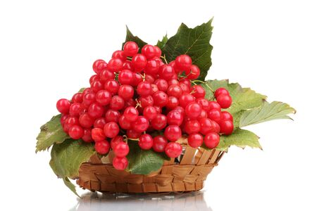 red berries of viburnum in basket isolated on white photo