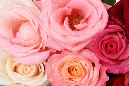 macro close up: Bouquet of beautiful roses isolated on white Stock Photo