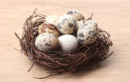 quail eggs in nest on wooden background photo