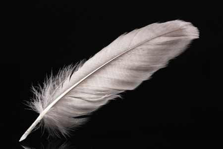 waft: beautiful feather on black background