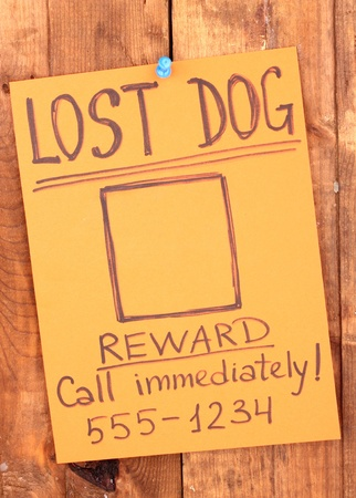 dog tag: Color advertisement lost