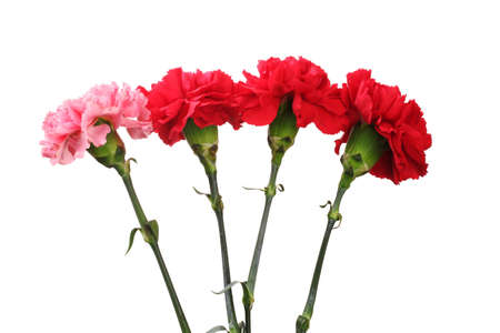 Bouquet of carnations isolated on white Stock Photo - 12439416