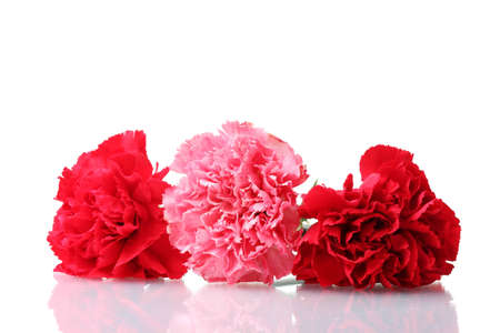 Bouquet of carnations isolated on white Stock Photo - 12439653