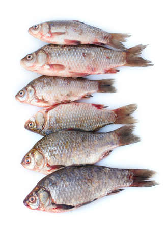 Fresh fishes isolated on white photo