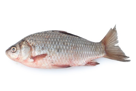 Fresh fish isolated on white photo