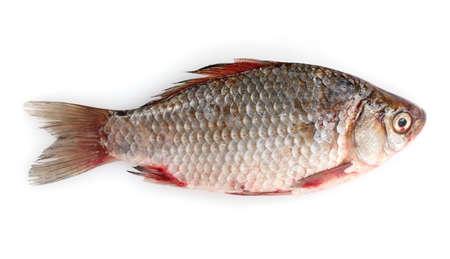 crucian carp: Fresh fish isolated on white