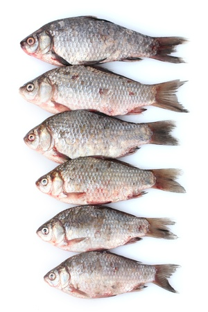 Fresh fishes isolated on white Stock Photo - 12665304