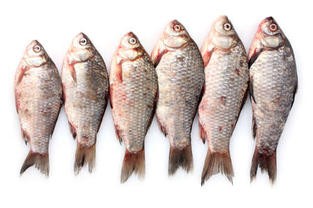 Fresh fishes isolated on white photo