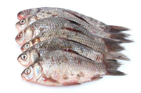 Fresh fishes isolated on white Stock Photo - 12664872